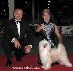 Champion BOB + BIG 3 - Ich. Cody z Haliparku, owner: Brychtová, judge: Frank Kane (GB)